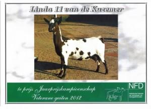 Linda 11 vd Kuzemer Jaarprijskampioen